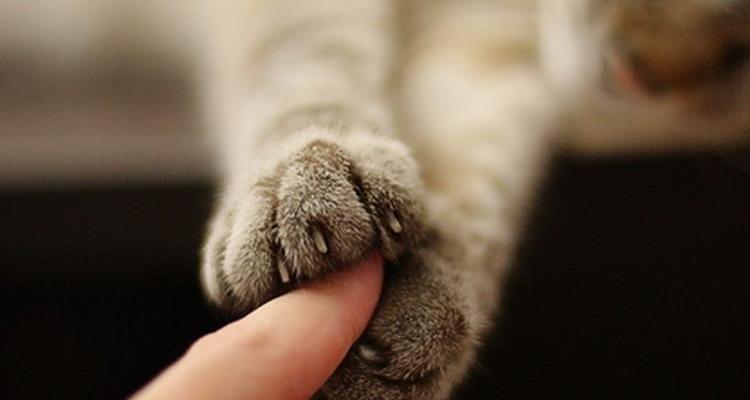 Любовь к кошке как признак психологического здоровья - Телепсихолог